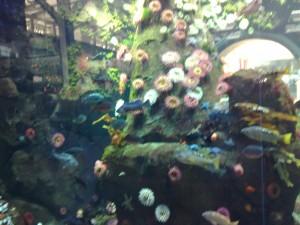 Aquarium vliegveld