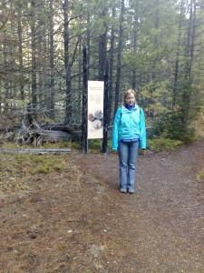 Fireweed Trail, een wandeling onderweg waar veel bos is afgebrand