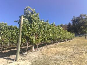 Grey Monk Winery Vernon