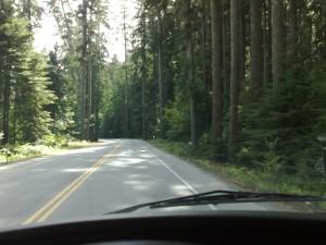 Prachtige bossen op Vancouver eiland