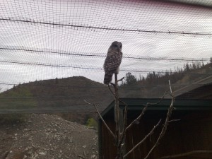 Een uil in Wildlife Park Kamloops